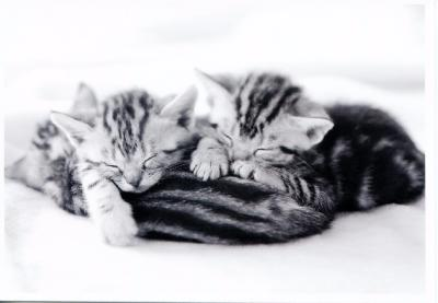 Chatons, carte postale